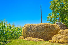 Hay stack and corn field summer view Royalty Free Stock Images
