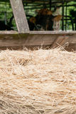 Hay stack with cow Stock Photos