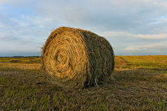Hay stack in a field. Royalty Free Stock Image