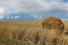 Sheaf of hay on a wheat field in Siberia. The Hay stack on the field in Siberia Royalty Free Stock Photos