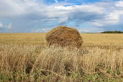 The Sheaf of hay in a wheat field. The Hay stack on the field in Siberia Royalty Free Stock Image