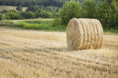 Hay stack on a harvested field Stock Photography
