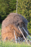 Hay stack near fir forest Royalty Free Stock Photography