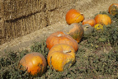 Hay stack and Orange Pumpkins Stock Image