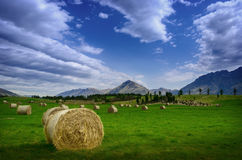 Hay stack in a summer field Royalty Free Stock Photo