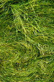 Hay stack texture Royalty Free Stock Image