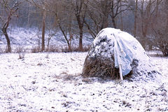 Hay stack winter forest. Rural nature season scene: hay stack in winter forest covered by snow Stock Photography