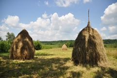 Hay in stacks. Stock Photography