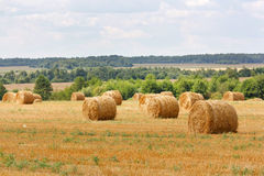 Hay stacks Stock Images