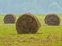 Free Hay Stacks Stock Photos - 6046223