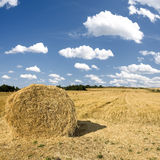 Hay stacks in autumn under blue skies Stock Image