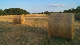 Hay stacks in Brossac. A view on hay stacks in Brossac France Royalty Free Stock Photography