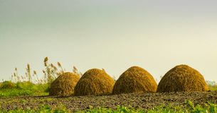 Hay Stacks dans le domaine isolé Images stock