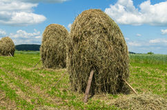 Hay stacks on farmland  against the blue sky. UKRAINE, JUNE, 2017:  Day countryside landscape. Hay stacks on farmland  against the blue sky Stock Photo