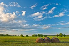 Hay stacks on field Stock Photography