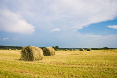 Hay stacks on the field Stock Photo