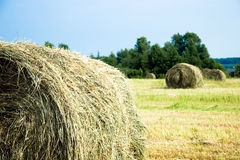 Hay stacks on the field Royalty Free Stock Photos