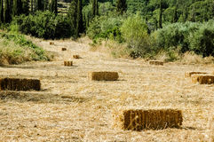 Hay stacks at field Royalty Free Stock Images