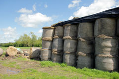 Hay stacks in a field with blue background Royalty Free Stock Images