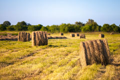Hay stacks in the field Stock Images