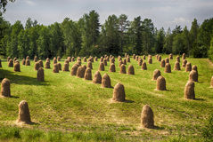 Hay stacks. Field with hay stacks after harvest Royalty Free Stock Image
