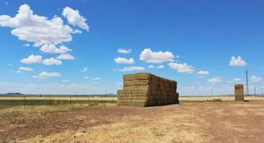 Hay stacks on a field Stock Photography