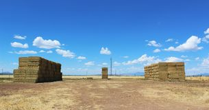 Hay stacks on a field Stock Photos