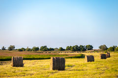 Hay stacks in the field in summer Royalty Free Stock Photos