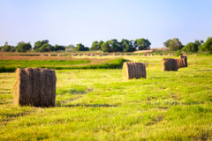 Hay stacks in the field in summer Royalty Free Stock Photography