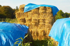 Hay in stacks Royalty Free Stock Images