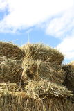 Hay stock photography