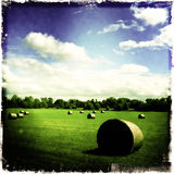 Hay stacks in green field. Hay stacks in a green field against a beautiful summer sky Royalty Free Stock Photo