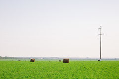 Hay stacks on green field Royalty Free Stock Images