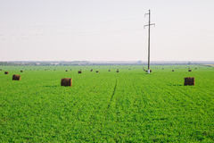 Hay stacks on green field Stock Photo