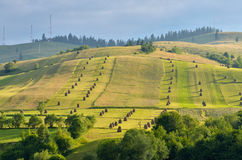 Hay stacks on the meadow Royalty Free Stock Photography
