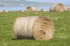 Hay stacks near ocean Stock Image