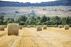 Hay Stacks On A Harvested Field Royalty Free Stock Images