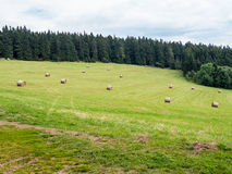 Hay stacks scattered over green grass meadow Stock Photography