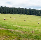 Hay stacks scattered over green grassy meadow. Many small hay stacks scattered over green grassy meadow next to mountain forest, harvest theme, bottom copy space Stock Photos