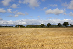 Hay stacks in summer Royalty Free Stock Photography