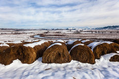 Grass Bales Cattle River Landscape Snow Stock Images