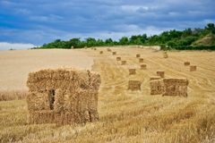 Hay stock Royalty Free Stock Images