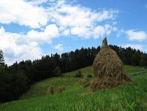 Hay Stock Piles auf einer Wiese mit grünem Gras, Forrest und bewölktem Himmel im Hintergrund Stockfotos