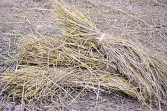 Hay and straw Stock Photography