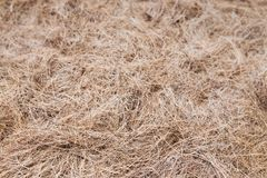 Hay straw background Stock Photo
