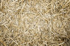 Hay or straw background texture. Hay or straw bale close-up background texture royalty free stock photo