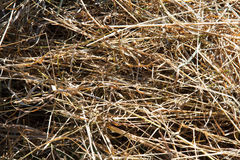 Hay and straw background. The texture of straw. Coil of hay. Haystack in the field. Panorama of rural beauty. The rural landscape. Autumn, harvest. Mowed hay Royalty Free Stock Photography