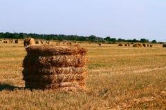 Hay Straw Bale On Agricultural Field, Hay Roll At Autumn Season Fotografía de archivo libre de regalías
