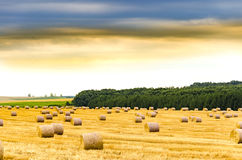 Hay straw bale at sunset Stock Photography
