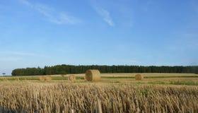 Hay Straw Bales auf dem Stoppel-Feld, dem blauen Himmel und Forest Backg Lizenzfreies Stockfoto